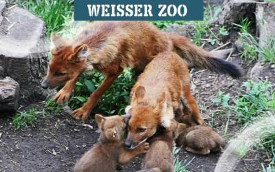 concircle unterstützt Tierpark Weißer Zoo
